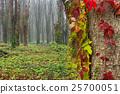 foliage, autumn, leaf 25700051