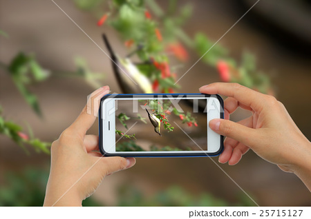 Woman Taking photo with mobile phone, Cellphone on 25715127
