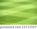 grass field 25715567