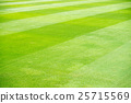 grass field 25715569