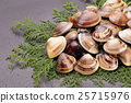 clam, shell, shellfish 25715976