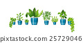 Set of different plants in flowerpot 25729046