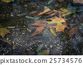 puddle, leaves, leaf 25734576