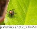 Macro small flies 25736450