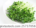vegetables, vegetable, radish 25737056