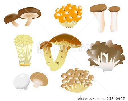 蘑菇 食用 矢量 25740967