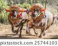 Traditional Bali buffalo race known as Makepung 25744103