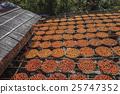 Persimmon cake in the sun bath 25747352