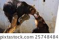 bear, bears, animal 25748484