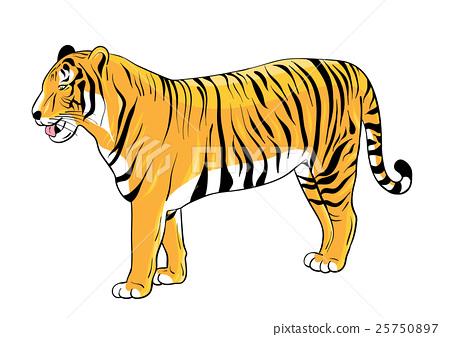 Tiger 25750897