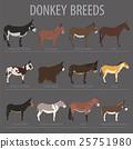 Donkey breeds icon set. Animal farming. 25751980