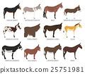 Donkey breeds icon set. Animal farming 25751981