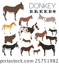 Donkey breeds icon set. Animal farming 25751982