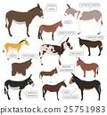 Donkey breeds icon set. Animal farming 25751983
