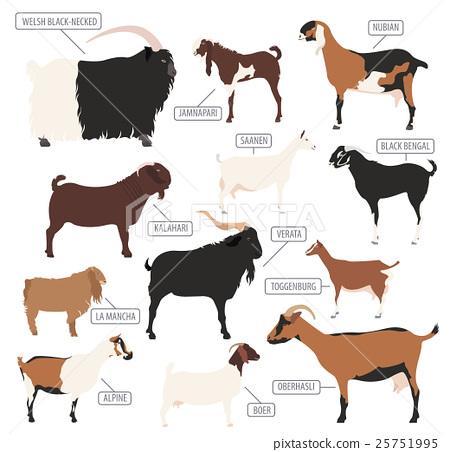 Goat breeds icon set. Animal farming. Flat design 25751995