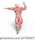 anatomy, human, body 25760007