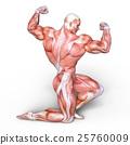 anatomy, human, body 25760009