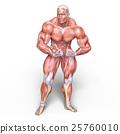 anatomy, human, body 25760010
