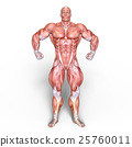 anatomy, human, body 25760011