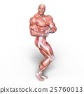 anatomy, human, body 25760013