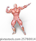 anatomy, human, body 25760014