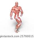 anatomy, human, body 25760015