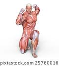 anatomy, human, body 25760016