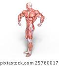 anatomy, human, body 25760017