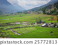 Rice field terraces 25772813