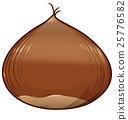 chestnut isolated on white background 25776582