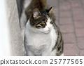 closeup shot of a cat 25777565