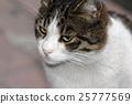 closeup shot of a cat 25777569