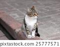 closeup shot of a cat 25777571