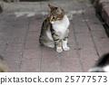 closeup shot of a cat 25777573