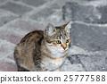 closeup shot of a cat 25777588