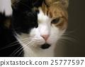 closeup shot of a cat 25777597