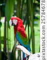 avian, bird, cockatoo 25784678