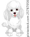Poodle 25787056