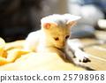 一只小猫 25798968
