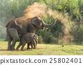 ช้าง,ป่า,ซึ่งมาจากป่า 25802401
