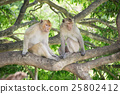 Monkey live in nature 25802412