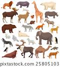 一组 一套 动物 25805103