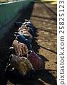 Baseball / Grab 25825123