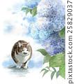 貓 貓咪 小貓 25829037