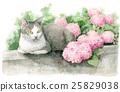 ไฮเดรนเยียสีชมพูและแมว 25829038