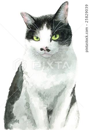 흑백 그릇 균열 고양이 25829039