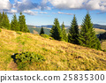 forest, mountain, tree 25835300