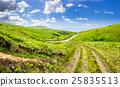 meadow, path, landscape 25835513