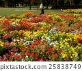 꽃, 가을, 식물 25838749