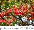가을, 열매, 식물 25838754